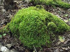 Mixed Lot 15 Live Moss Plants,Great for Aquariums,Terrariums,Dish Gardens + More