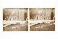 Giraffa Zoo Da Parigi Francia Foto n46L7-34 Placca Lente Stereo Vintage