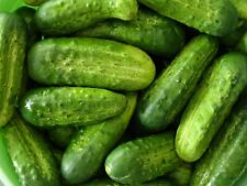 Cucumber National Pickling Vegetable Seeds 50 Ct NON-GMO US SELLER FREE SHIPPING