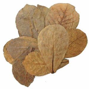 10pcs Large Indian Catappa Almond Leaves Dried shrimp betta fish aquarium care