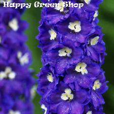 PACIFIC GIANT - KING ARTHUR - 70 SEEDS - Delphinium Cultorum - PERENNIAL FLOWER