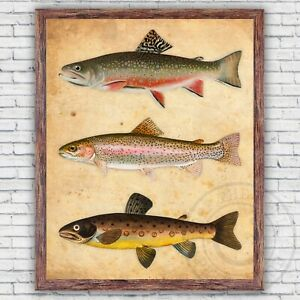 Trout Fish Species Illustration Print, Rainbow Brook Brown, Size & Frame Options