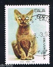 ITALIA 1 FRANCOBOLLO ANIMALI GATTO DEVON REX 1993 timbrato