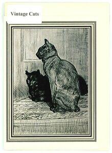 Nostalgic vintage Cat greeting card. c 1914 image by T.Steinlen. blank inside.