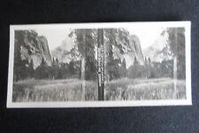 PHOTO STEREOSCOPIQUE CALIFORNIE VALLE DU YOSEMITE CHAMP DE FLEUR 1905