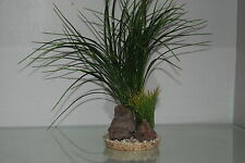 Aquarium Green Grass and Rocks 11 x 11 x 30 cms Suitable For All Aquariums