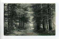 Sharon MA Mass Gun House Lane, antique postcard