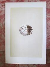 Vintage Print,SPOTTED EAGLE EGG, Morris' Nests & Eggs, 1879,Birds