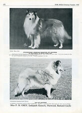 ROUGH COLLIE OUR DOGS 1951 DOG BREED KENNEL ADVERT PRINT PAGE LADYPARK KENNEL