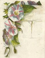 Lion Coffee Woolson Spice Co Toledo Ohio Victorian Trade Card Flower Bufford