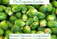 Brussel Sprouts Long Island Seed 25 Seeds Heirloom Vegetable Garden Nutritious