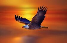 Modern Home Decor bird Animal Eagle oil painting picture Printed on Canvas VI