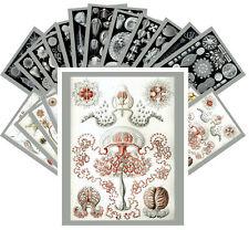 24 Postkarten Set *Kunst Formen der Natur by Ernst Haeckel Retro Magazine CC1033