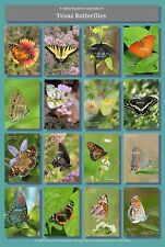 Butterflies of Texas Poster Hi-Res 13X19 A3+ Butterfly Insects Lepidoptera