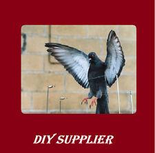 2 metre long bird post wire bird spike control proof repeller very safe