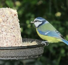 6 nutty fat suet cakes bird food feed for wild birds sim 2 fat balls slabs c