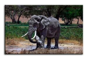 Wall Art Canvas Picture Print of Large Elephant Serengeti Framed