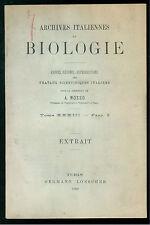 ARCHIVES ITALIENNES BIOLOGIE TOME XXXIII FASC. I  EXTRAIT LOESCHER 1900 BIOLOGIA