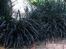 ornamental grasses in plant form:plant, watering:%21   ebay, Gartenarbeit ideen