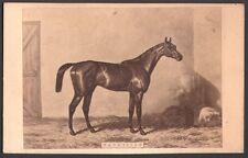 Hippisme. Cheval de course - Patricien. Photographe Goupil. Vers 1870. CDV