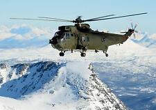 Royal Navy Sea King Helicopter Naval Air Squadron Norway 12x8 Inch Photo