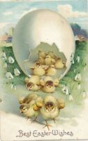 EASTER - Lots of Chicks Coming Out Of Egg