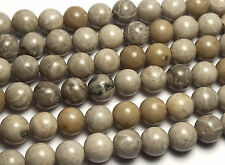 "15"" Strand ""Petoskey"" FOSSIL CORAL 8mm Round Beads"