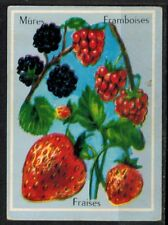 Carte Chromo - Image - Mûres.Framboises.Fraises - Fruits - Réf.177