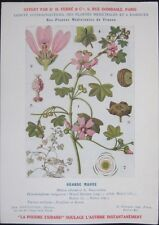 1920 French Medicinal Plant Botanical Print-Wood Mallow