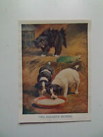 """PUPPIES CAT HUMOROUS PRINT """"TWO NAUGHTY PUPPIES"""" OLD PRINT DATED c1920"""