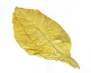Virginia Klasse 1 Duft & Deko Blätter Naturtabak Rohtabak 500g (15,98€/kg)