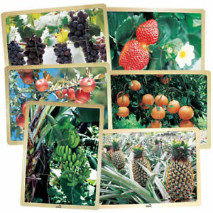 MOJO Fresh Fruits Puzzles - Set of 6 Puzzles - Promote Healthy Living and