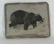 Image Grizzly Bear on Slate, Sierra Slate Images Tom M. Wolff picture
