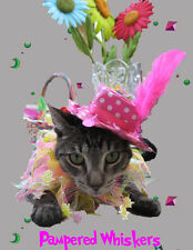 In the Pink cat hat and All Hopped Up party collar for dogs and cats
