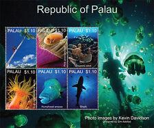 Palau-2013-MARINE LIFE OF PALAU-Fish