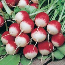 Radish Sparklers 50 Seeds