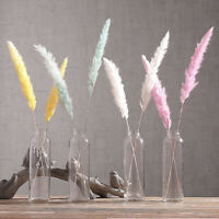 5pcs Natural Reed Getrocknet Blume Phragmiten Ast DIY Home Party Office Decor