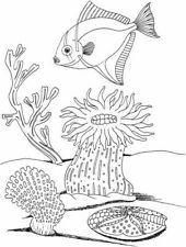 Scene - Scenery - Fish - UnderWater #2 Unmounted Clear Stamp Approx 57x75mm