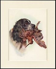 COCKER SPANIEL WITH BIRD GREAT GUN DOG PRINT MOUNTED READY TO FRAME