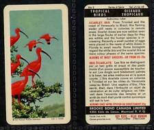 Brooke Bond Canada, Tropical Birds 1964 VG (any from 1-24 list)