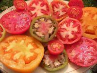 Heirloom Tomato Seed Assortment- 10 Varieties- 975+ seeds