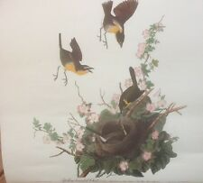 FINE ART LITHOGRAPH: Yellow Breasted Chat Book Plate By JJ Audubon