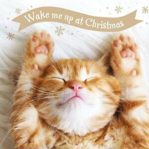 CHARITY Christmas Cards   Festive Ginger Tabby Cat / Kitten   Pack 10