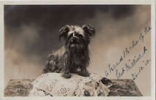 Unframed Collectable Antique Domestic Animals Photographs