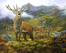 Red Deer Limited Edition Print by Robert J. May