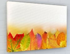 STUNNING AUTUMN TREE LEAVES CANVAS PICTURE PRINT CHUNKY FRAME LARGE 2270-2