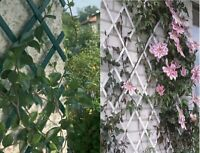 Expanding Garden PVC Plastic Trellis Climbing Plants Wall 1.5mx40cm / 5FTx1.3ft