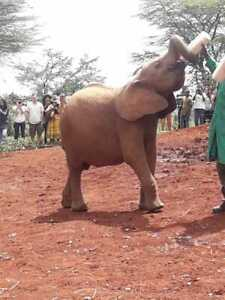 Nairobi Special Tour  (Solo or more travellers)