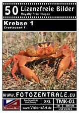 50 Lizenzfreie Profi-Bilder/Fotos! Krebse 1 (Royalty Free) DVD! 500 MB