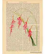 Fairy's Wand Flowers Art Print on Antique Book Page Vintage Illustration